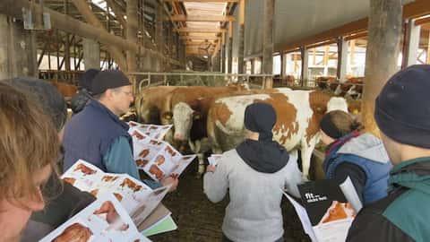 Die Herdenmanager lernen Fleckviehkühe einzustufen